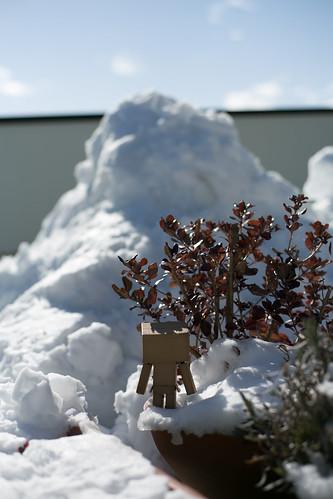 Omiya Big Snow
