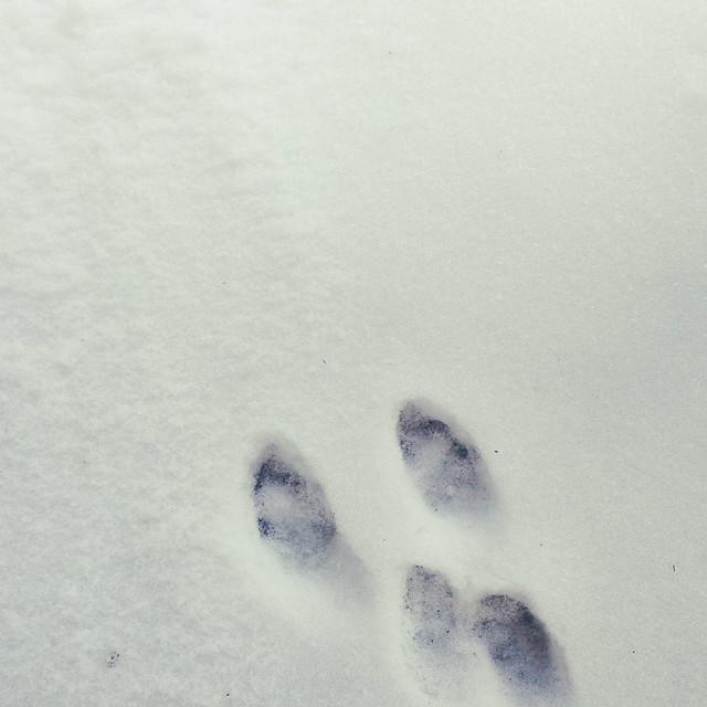 bunny tracks