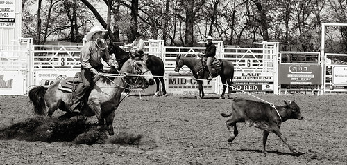 Ashland rodeo 2014 - Roping 5 bw