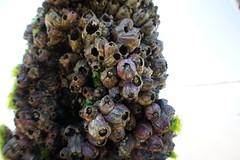 flora, conifer cone,
