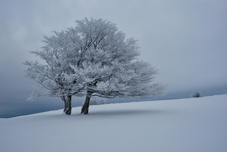 Snow covered tree - Creux du van