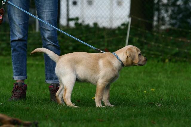Puppy- en Jongehondenles 09-05-2016