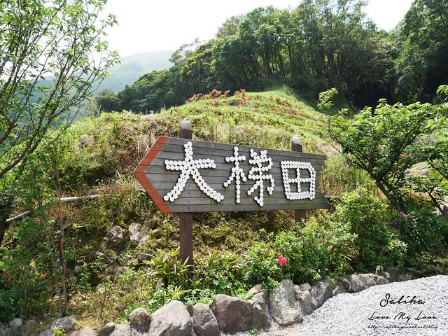 陽明山繡球花大梯田農場 (34)
