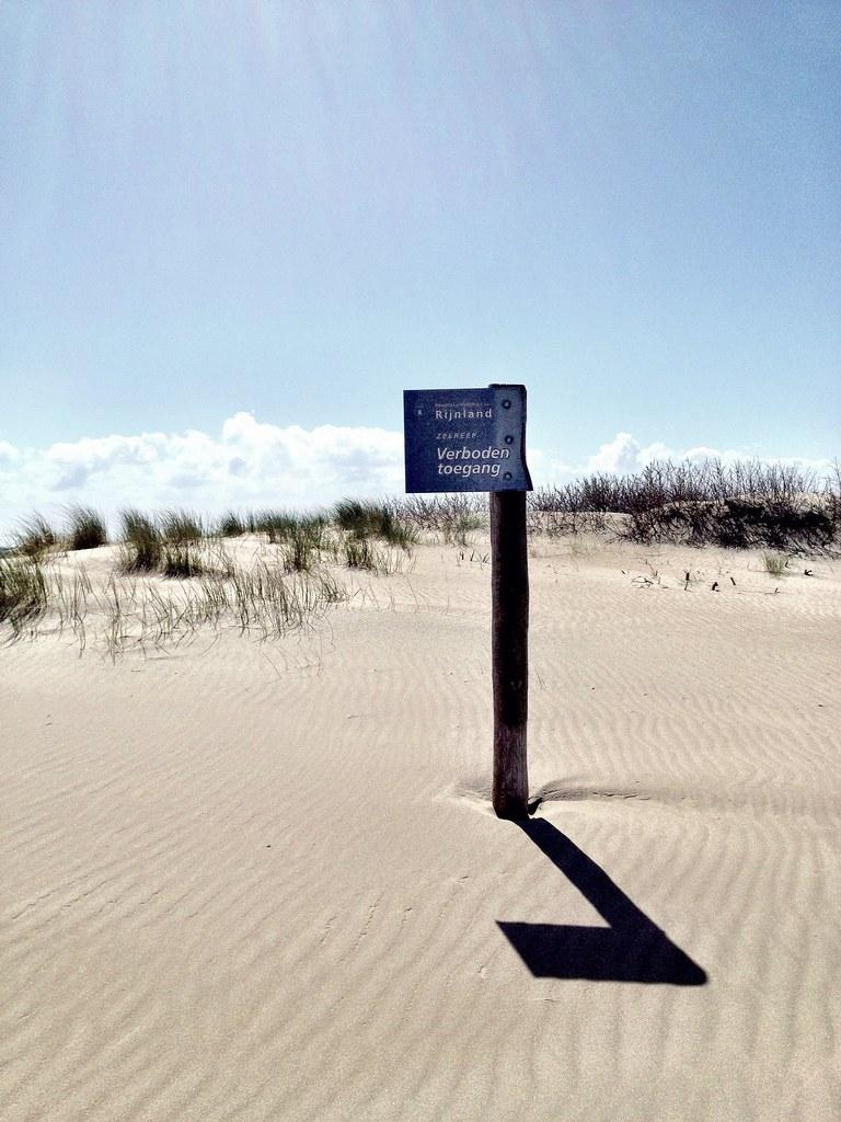 Dunes, Zandvoort