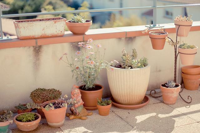 terrasse et plantes grasses succulentes
