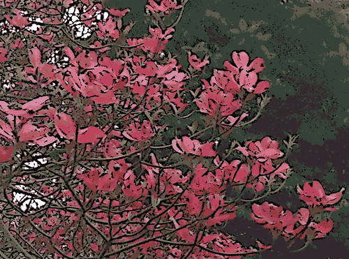 Pink Dogwood  (Digital Woodcut) by randubnick