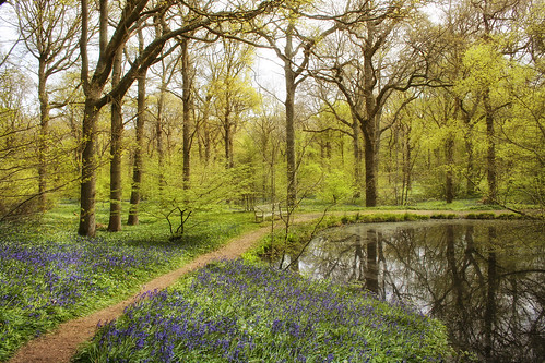 trees nature beauty bluebells arlington reflections bench pond woods serenity pathway springtime bluebellwoods woodanemones larigan phamilton