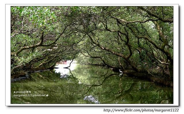 【台南之旅】四草綠色隧道~迷你亞馬遜河在台灣