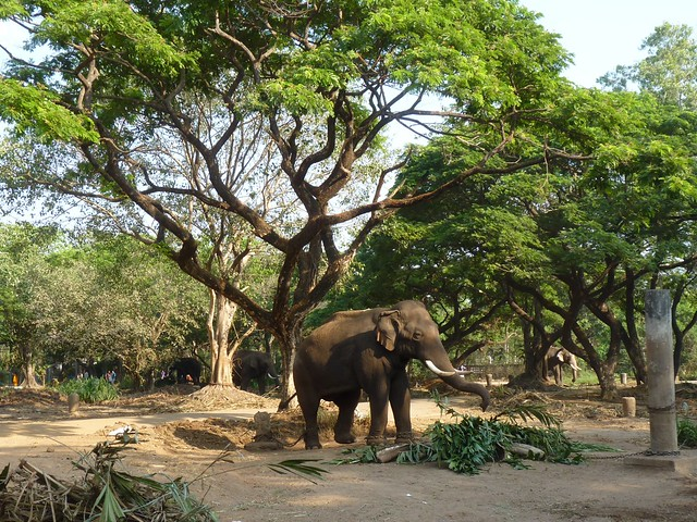 Elephant sanctuary near Thrissur, Kerala | Flickr - Photo ...