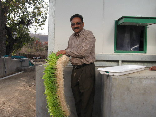 kashyap bhatt inspecting hydroponics maize fodder