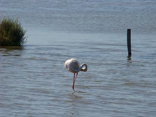 094 flamingo's