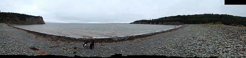 Dogs at Cape Enrage