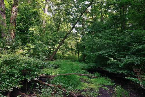 Van Cortlandt Park - Northwest Swamp