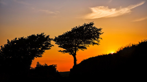 trees england plant landscape flickr unitedkingdom large sunsetsunrise porlock bedroomwall
