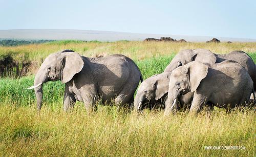 Kenia - Masai Mara 35