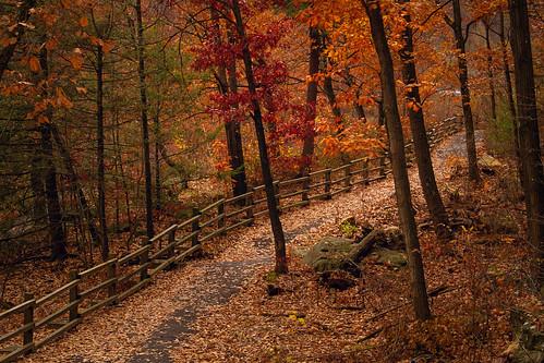 autumn leaves fallfoliage scranton nayaugpark