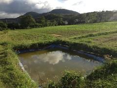 生態池預計養殖台灣種原生魚。
