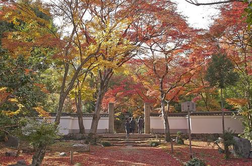 【写真】紅葉 : 浄住寺