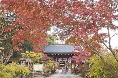 【写真】紅葉 : 梨木神社