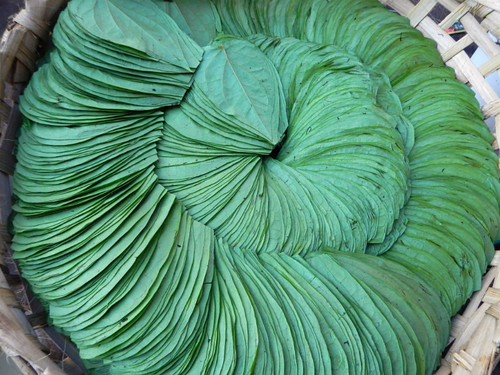 betel leaves arranged for purchase, to follow the ancient tradition of chewing paan