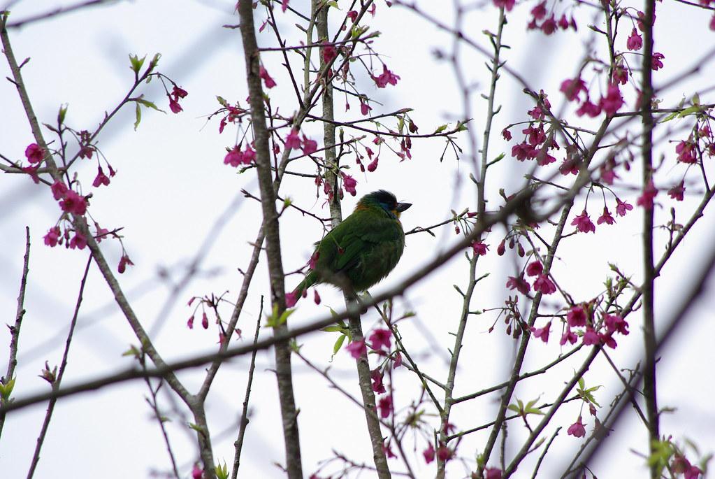上星期之烏來打鳥...可能各位看倌也得找鳥篇...