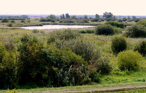 威肯濕地的實景