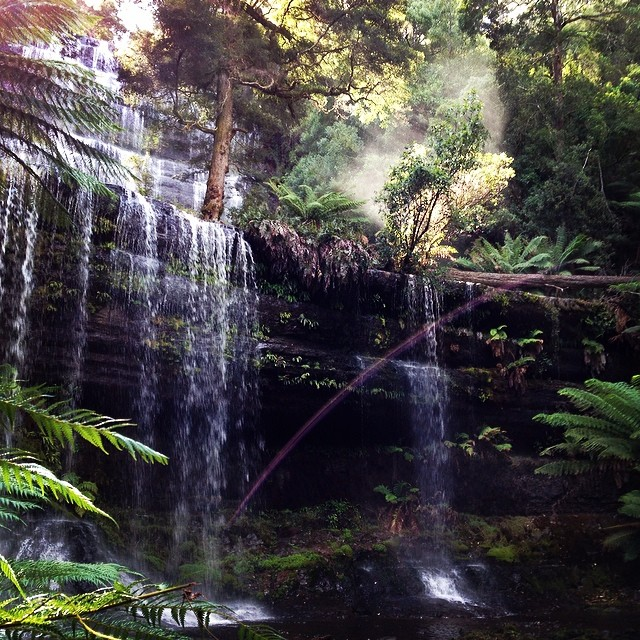 Waterfall, forest, mist, rainbow... #perfection #russellfalls #tasmania #instatassie