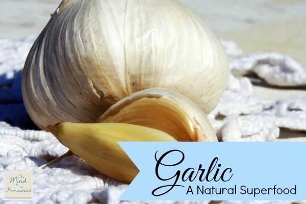 Garlic A Natural Superfood {Herbal Primer}