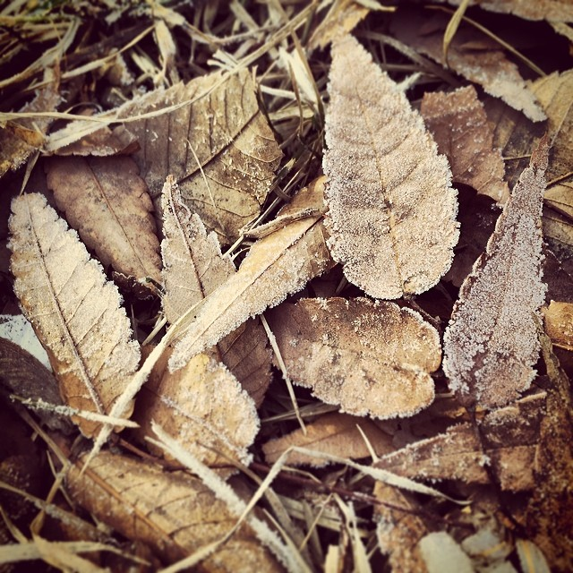 #instagram #instagood #korea #seoul #early #morning #frost #fallen #leaves