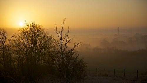 trees sun mist fog sunrise dawn day alba fields sole buckingham nebbia bucks