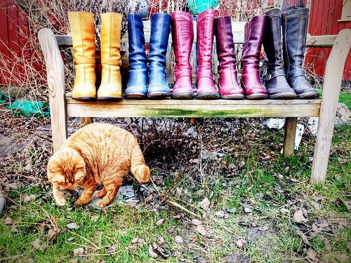 one cat and five boots