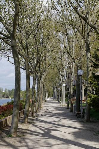 Les arbres se courbent pour accéder à la lumière, car en grandissant ils occupent un volume plus important qu'au moment de leur plantation… il y a 20 ou 30 ans. IMG_2937_DxO