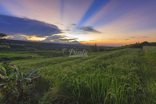 bali field sunrise landscape photography tour rice mount guide jatiluwih tabanan baliphotography balitravelphotography baliphotographytour baliphotographyguide