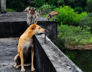 ,, Mama & Monkeys ,,