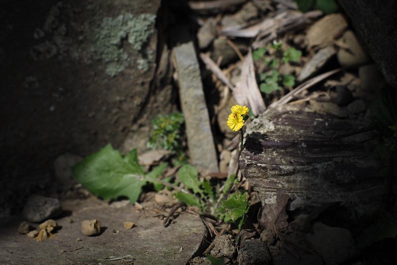 花花花|獨立山