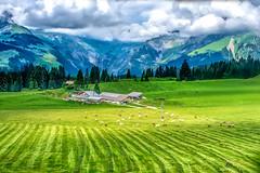 sport venue(0.0), golf course(0.0), paddy field(0.0), alps(1.0), agriculture(1.0), field(1.0), mountain(1.0), grass(1.0), valley(1.0), plain(1.0), nature(1.0), mountain range(1.0), hill(1.0), green(1.0), plateau(1.0), terrace(1.0), meadow(1.0), landscape(1.0), pasture(1.0), rural area(1.0), grassland(1.0), mountainous landforms(1.0),