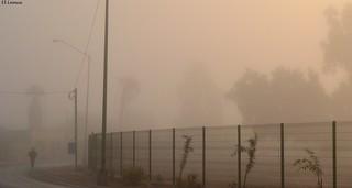 Cachanilla Woman Walking through the Haze for work Hoy Al Amanecer Una Mujer Cachanilla Camina entre la Niebla para ir a su Trabajo Foto:El Lemus