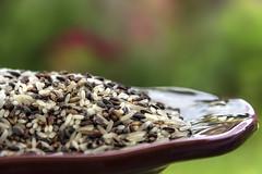 Uncooked Purple Jasmine Rice