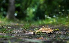 Quietness after the rain