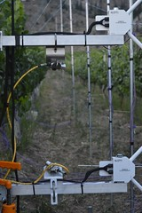 Katabatic flow through vineyard - infrared thermometers