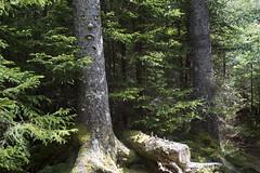 Blue Mountain Hiking Trail