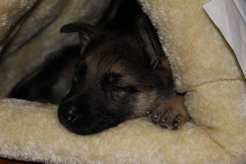 Bella, sleeping