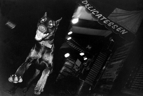 Jill Freedman, Flying Dobie, New York City, 1984