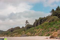 Nature Near the Beach