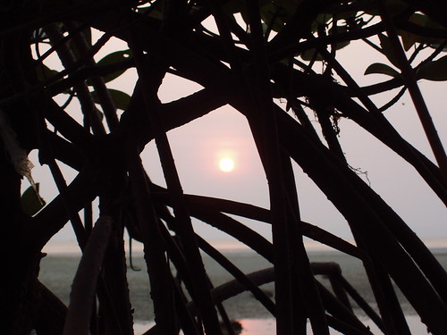 201102130501-mangrove-roots-sunset