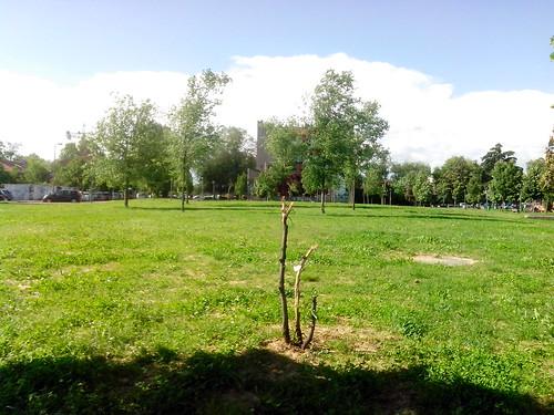 Il futuro albero senza ali by Ylbert Durishti