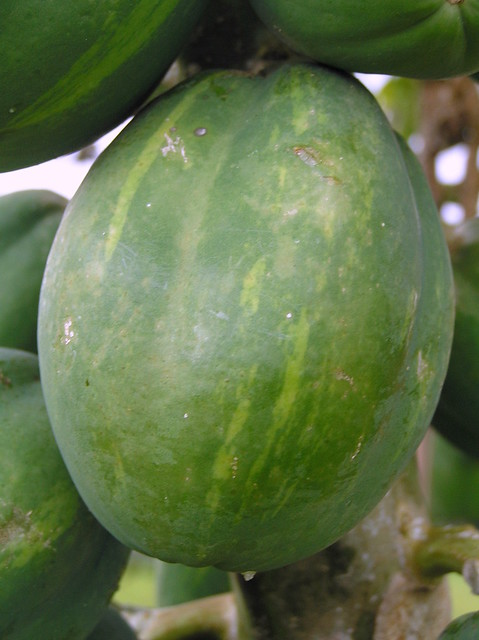 P2050433 Variegated papaya from Flickr via Wylio