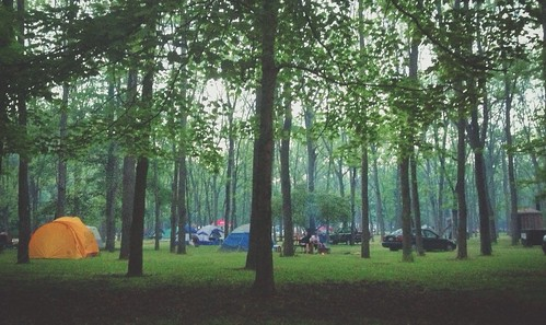 dreamy foggy camping grove