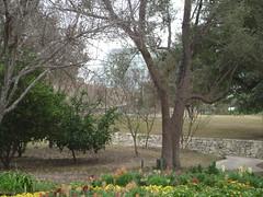 San Antonio Botanical Gardens (3)