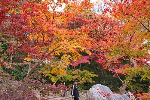 【写真】2012 紅葉 : 光明寺/2020-11-11/IMGP6524